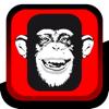 Monkey Magazine