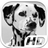 Aleksus - Dalmatian Simulator HD Animal Life artwork
