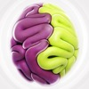 Cerebral hemispheres: how do you use your brain? for iPhone