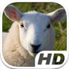 Aleksus - Sheep Simulator HD Animal Life artwork