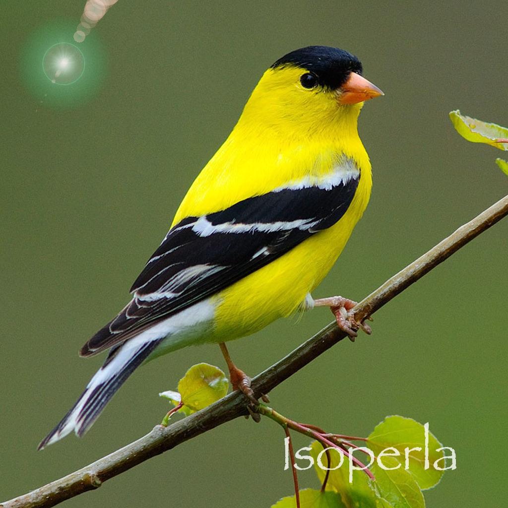 Bird Song Id USA