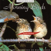 Sounds of the Earth: Morning Birds