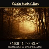 A Night In the Forest (Nature Sounds) - Single
