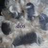 Dos y Dos (Bonus Video Edition) ジャケット写真