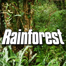 Rainforest (Nature Sound) - Single, Sounds of the Earth