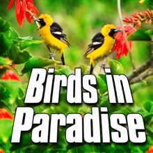Birds In Paradise (Nature Sound) - Single, Sounds of the Earth
