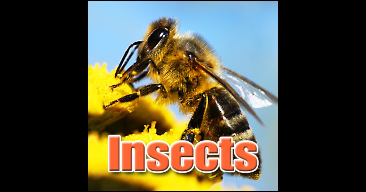 Bees Buzzing Sound Effect Free - YouTube