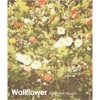 Buy Filled With Flowers - EP by Wallflower on iTunes (另類音樂)