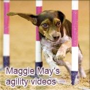 Maggie May's agility videos