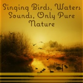 Singing Birds, Waters Sounds, Only Pure Nature – Music for Deep Rest, Spa, Relaxation & Meditation, Sleep, Healing Songs