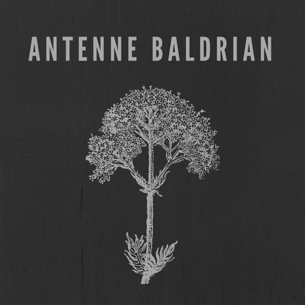 Antenne Baldrian