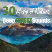 30 Music of Nature: Deep Forest Sounds - Magical Sleep & Relaxation Time, Zen Yoga Meditation, Mystical Rivers, White Noises, Birds & Animals Sounds to Relieve Stress