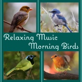 Relaxing Music: Morning Birds Songs, Peaceful Afternoon in the Forest, Ambient Nature Sounds to Reduce Stress and Well Being
