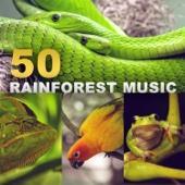 Rainforest Ambience Music