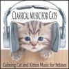 Classical Music for Cats Calming Cat and Kitten Music for Felines