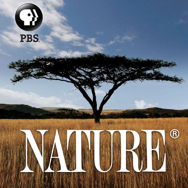 NATURE | PBS