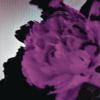 John Legend - All of Me (Tiësto's Birthday Treatment Remix) [Radio Edit] kunstwerk