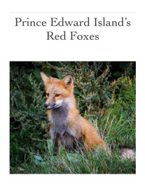 PRINCE EDWARD ISLAND'S RED FOXES