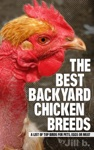 The Best Backyard Chicken Breeds A List Of Top Birds For Pets Eggs And Meat