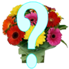 Orion Software Services - Name_the_Flower artwork