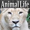 Animal Life HD