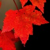 WallPix HD-Autumn Leaves