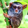 Primates Bible