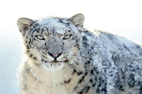 Leopard** screenshot 3