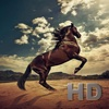 Horse Collection HD