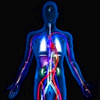 The Body - Human Anatomy Learning Tool & Quiz