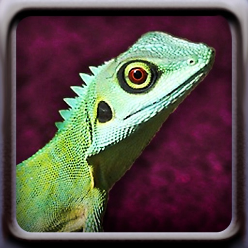 Lizards iOS App