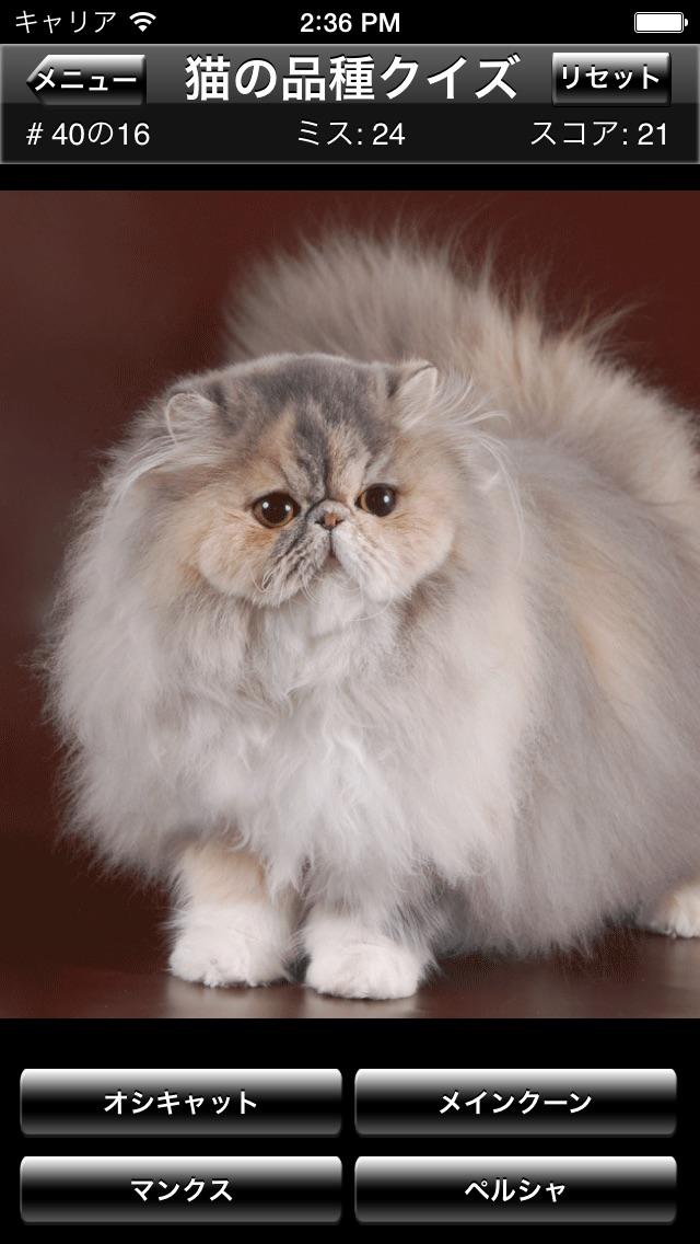 猫の品種クイズ screenshot1