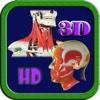 3D Human Head & Neck Muscle HD