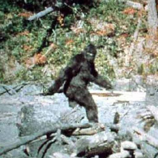 Bigfoot Camera Prank iOS App