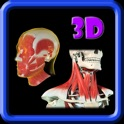 3D Human Head & Neck Muscle Pro icon
