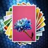 faceinhole.com iOS App