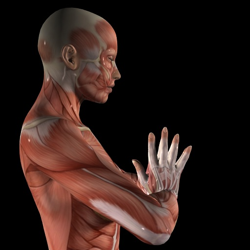 Anatomy of Yoga -Bound Angle, Firefly, and Downward-Facing Dog Poses