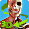 Easy Anatomy 3D