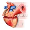 Miniatlas Cardiología