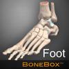 BoneBox-Foot