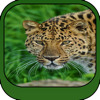 Animal and WildLife Wallpapers HD for All iPhone and iPad
