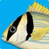 Peixes Marinhos - Guia de Identificação