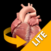 Herzanatomie - Heart 3D Atlas of Anatomy Preview