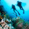 Mergulho - incrível mundo subaquático