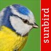 Vogel Id Österreich - Vögel Erkennen und Bestimmen in Natur und Garten