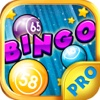 Bingo Groove PRO - Play Online Casino and Gambling Card Game for FREE !