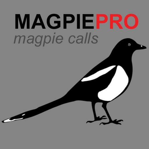REAL Magpie Hunting Calls & Magpie Sounds!