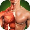 Anatomía Humana 3D - Entrenador Personal