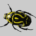 Beetle Solitaire icon