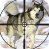 Deadly Wolf Snow Hunting Shoot
